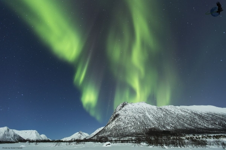 Northern Lights in Vesteralen