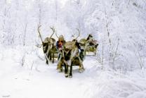 Reindeer Sleigh Ride in Lapland Christmas