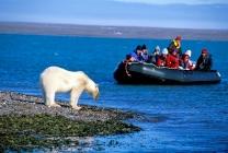 Polar Bear in Spitsbergen
