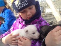 Husky Encounter - Longyearbyen
