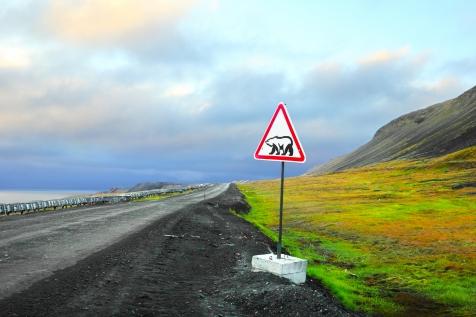 Polar Bear Warning Signpost