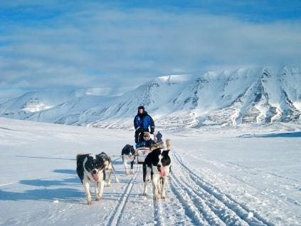 Husky Mushing In Spitsbergen