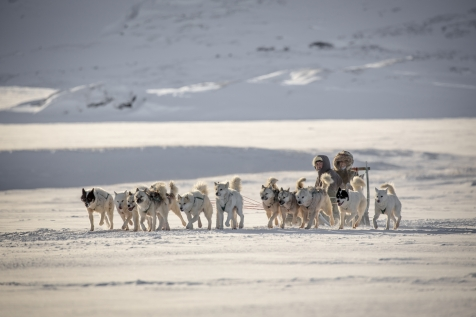 Experience Dog Sledding OnThe Ice Fjord