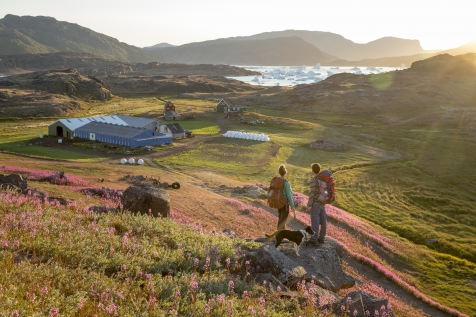 Hike By Tasiusaq Sheep Farm