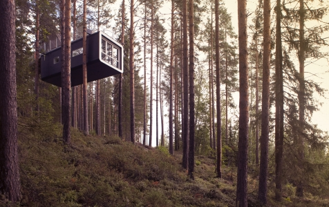A Cabin In The Trees