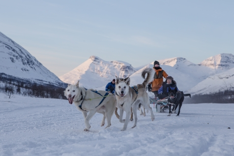Dog Sledding In Tromsø