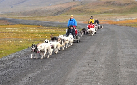 Husky Wagon In The Arctic wilderness