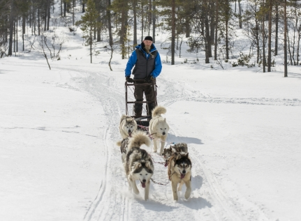 Dog Sledding Experiences In Finnish Lapland