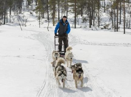 Dog Sledding Experiences In Finnish Lapland