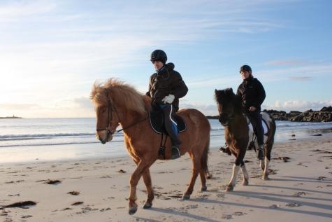 Experience Lofoten By Horseback