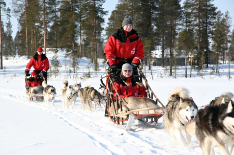 Meet The Amazing Arctic Animal On A Dog Sledding Tour