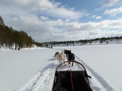Dog Sledding Experience