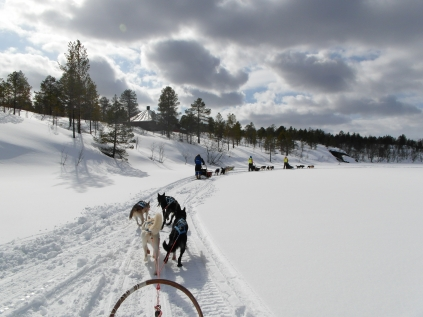 Arctic Dog Sledding Experience