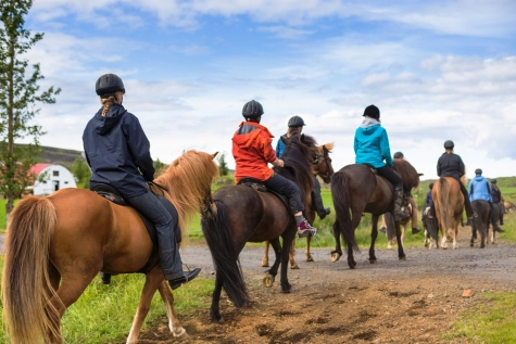 Get Acquainted With Your  Icelandic Horse