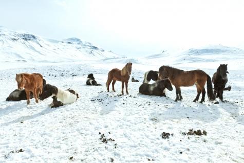 Take A Horse Trek Around The Icelandic Landscape