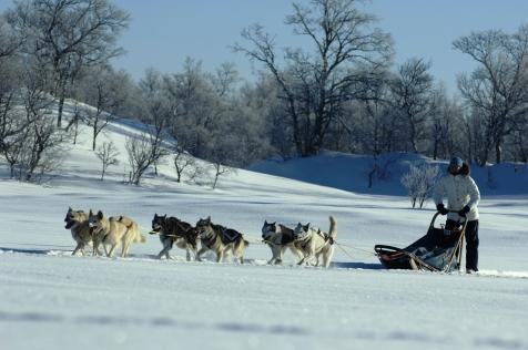 Join An Alaskan Husky Tour In Roros