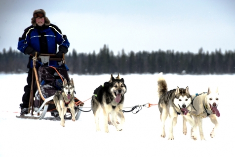 An Unforgettable Dog Sledding Experience