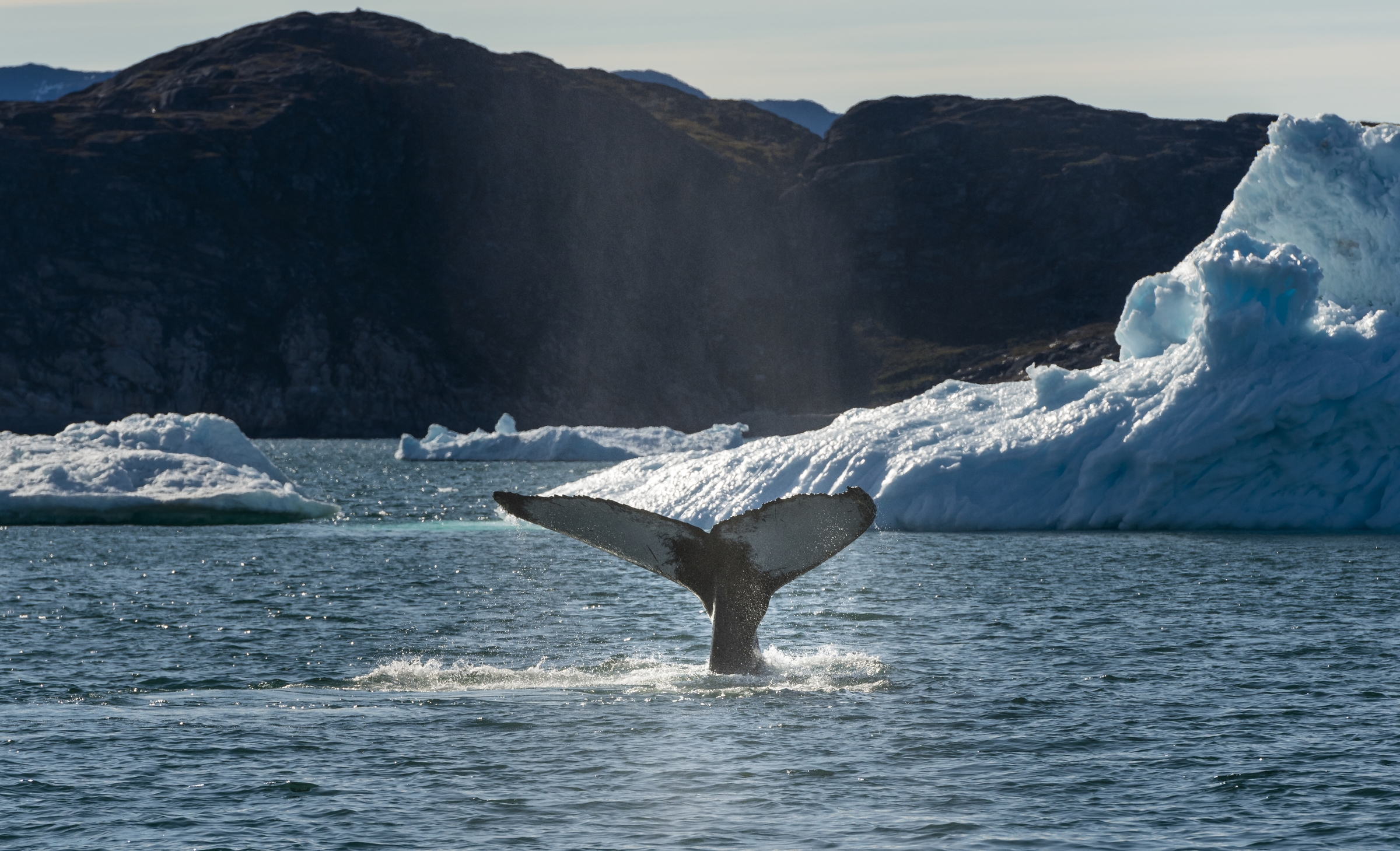 Whale Watching - Greenland