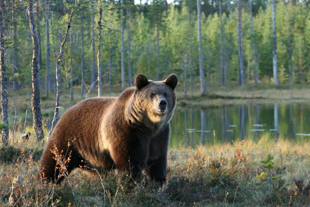 The Wild Taiga Nordic Experience