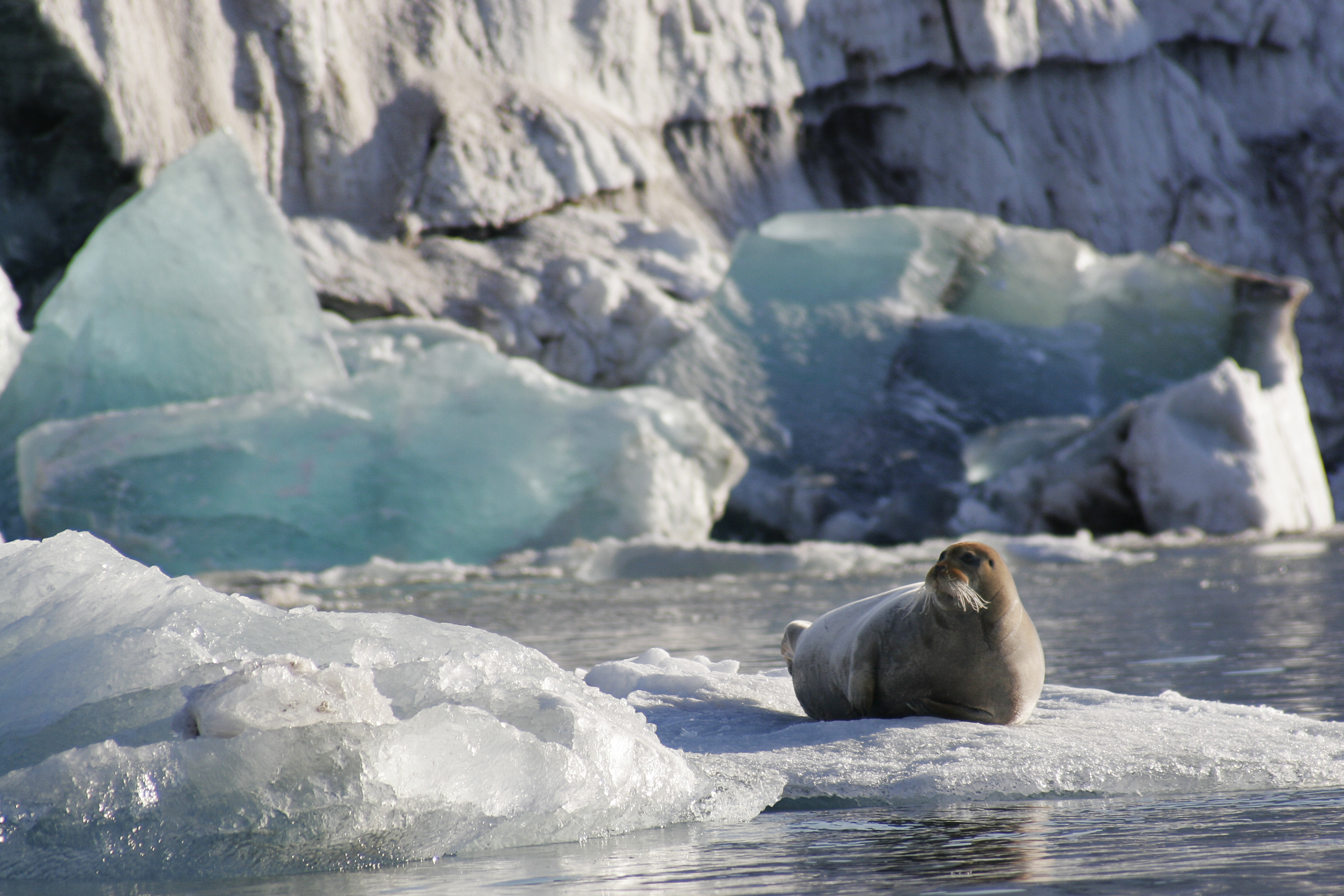 Spitsbergen Expedition Cruises