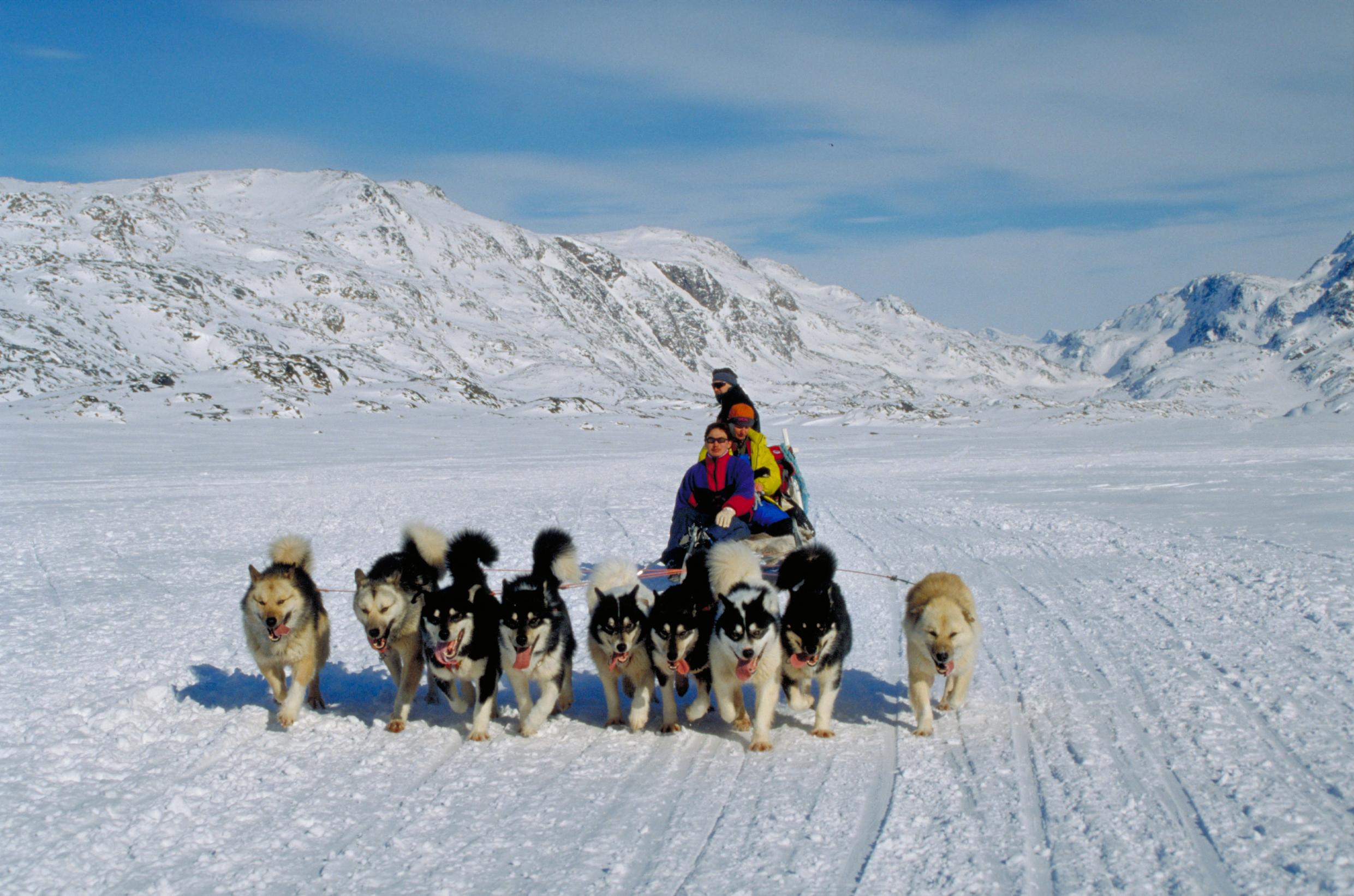 Husky Rides In Kangerlussuaq Nordic Experience
