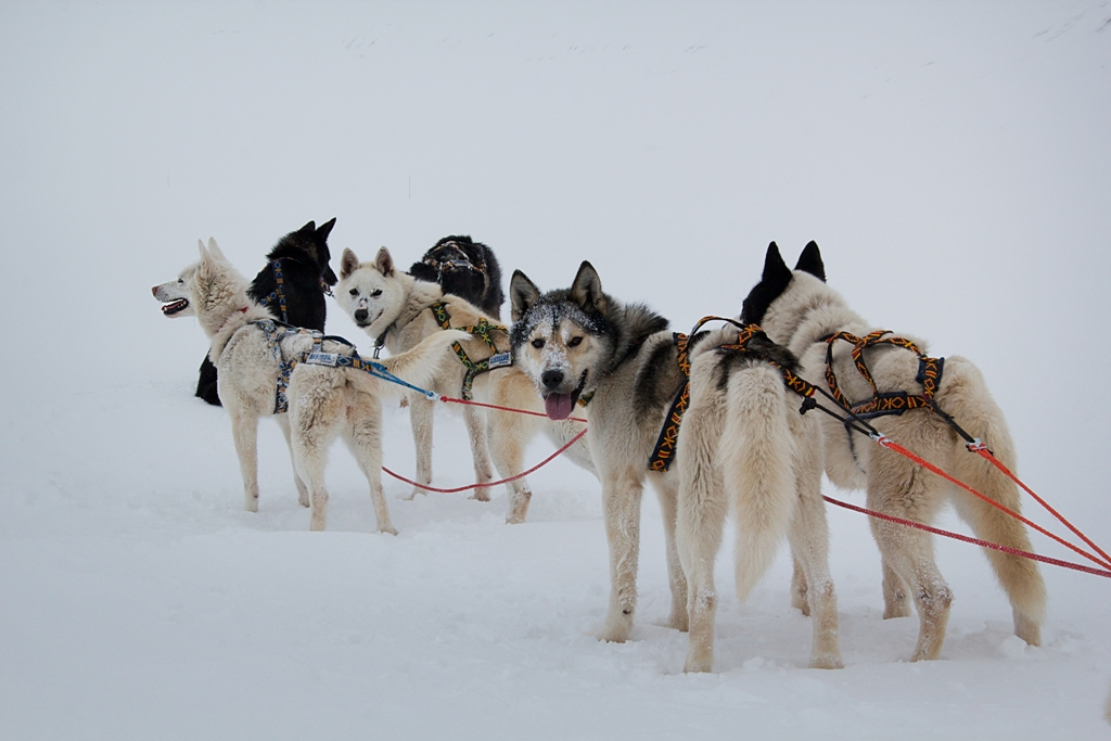 Friendly Canines Nordic Experience