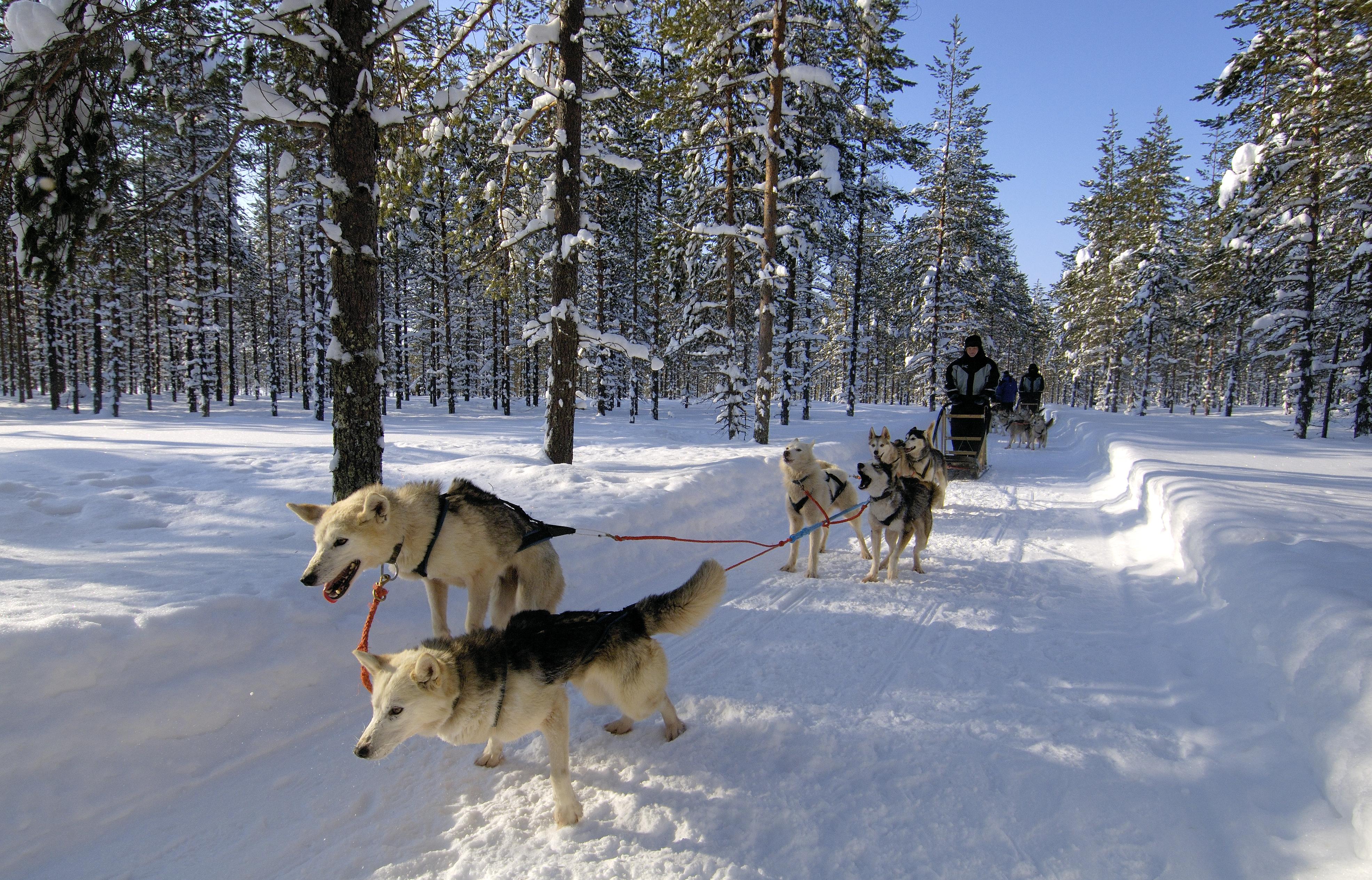 Husky Mushing Nordic Experience