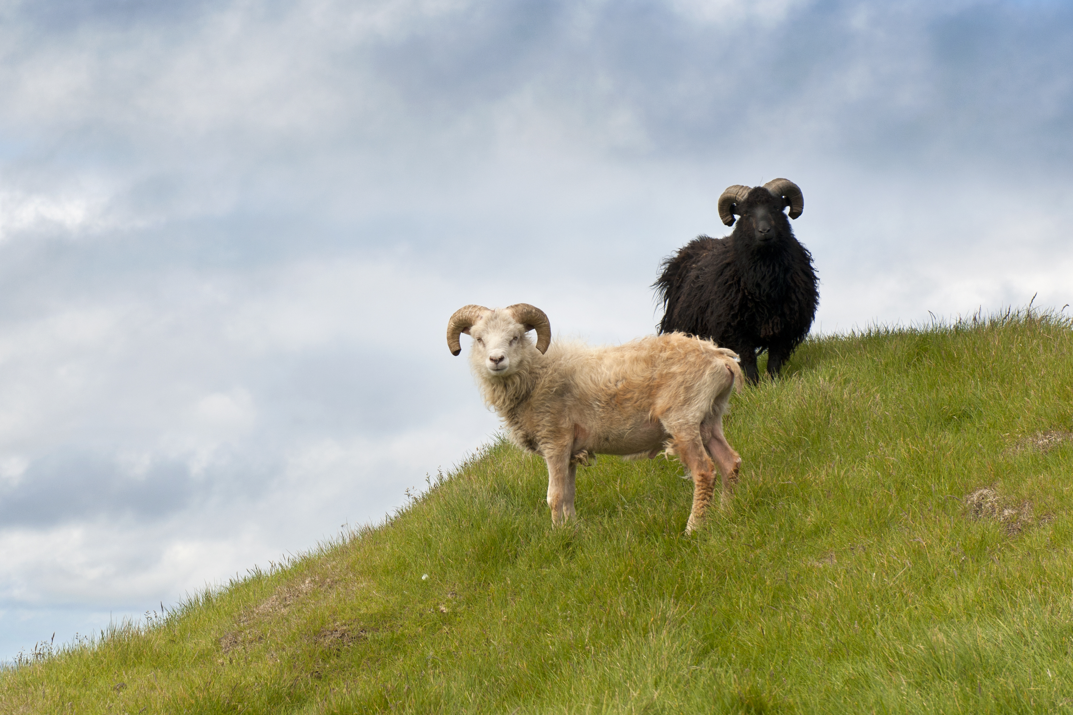 Wildlife On The Faroes Nordic Experience