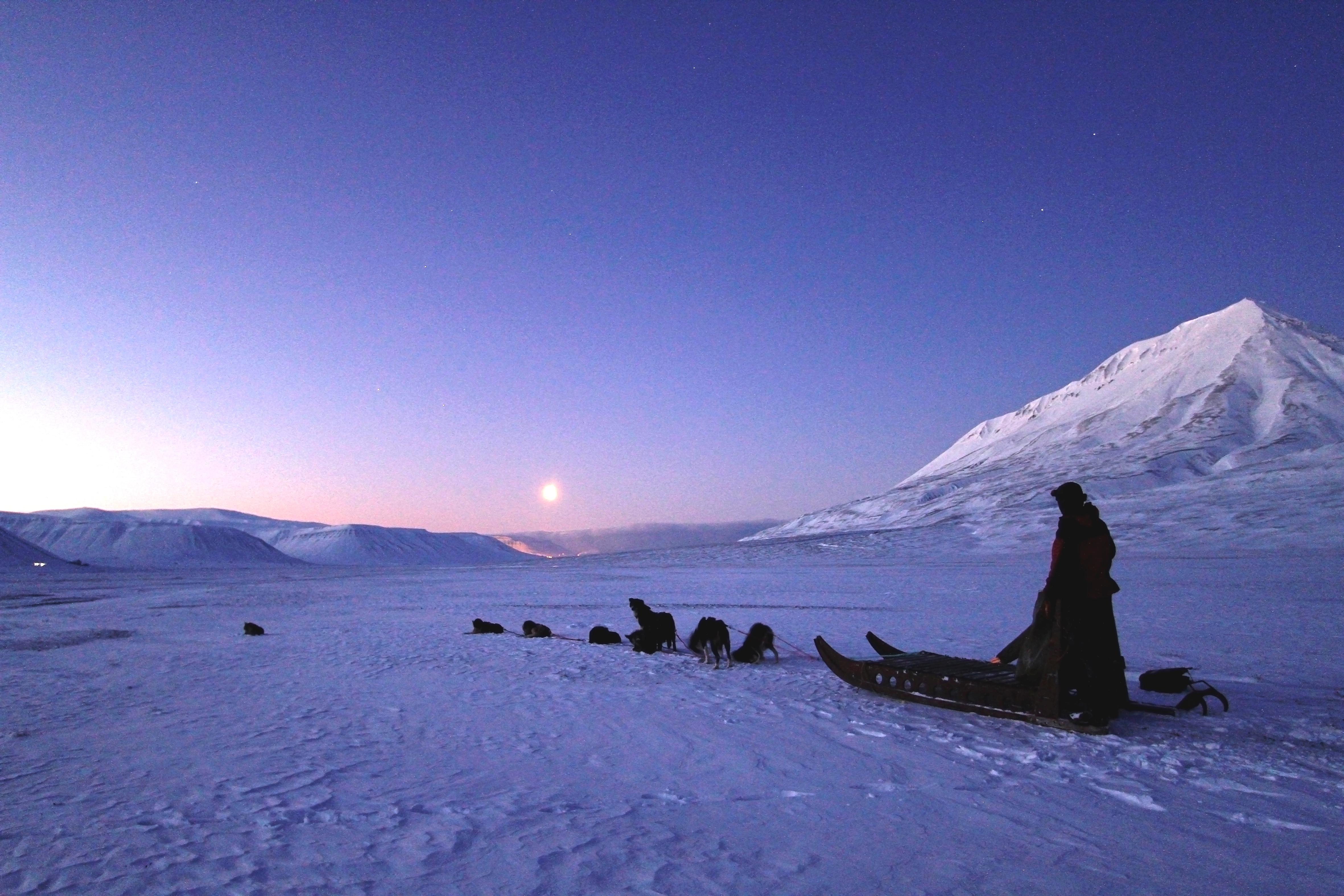 Dog Sledding Spitsbergen